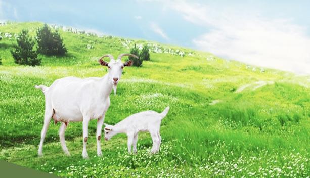sữa dê có tác dụng làm trắng da tự nhiên