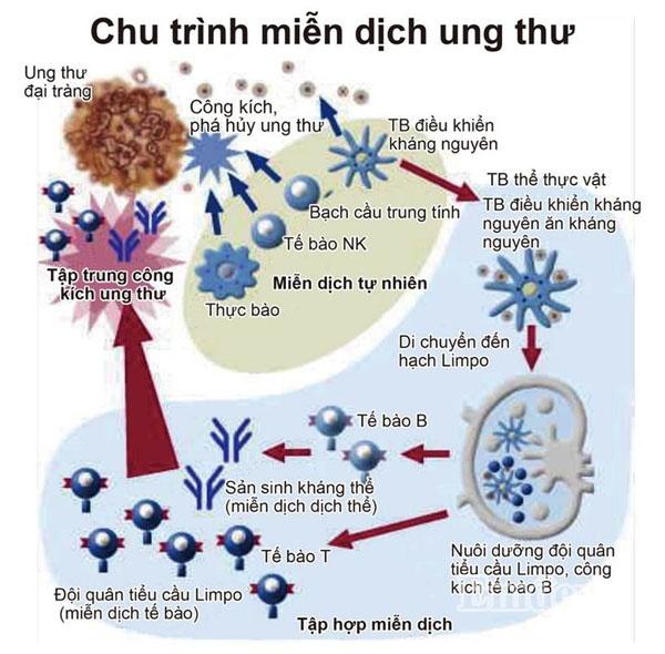 điều trị ung thư bằng miễn dịch