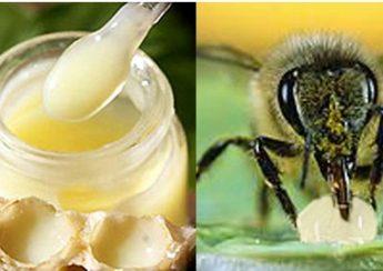 sữa ong chúa, lợi ích của ong mật