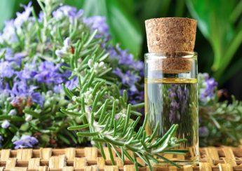 hương thảo phòng chống bệnh ung thư